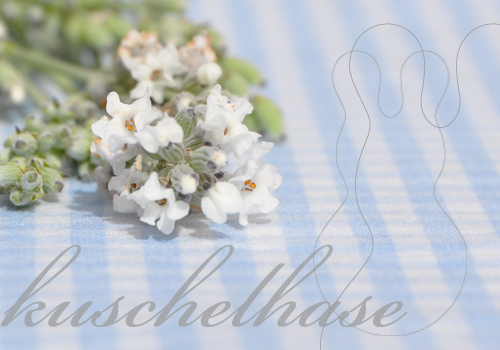 Lavendelhase_download