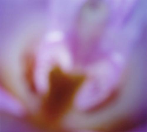 Orchidee002_naturkinder