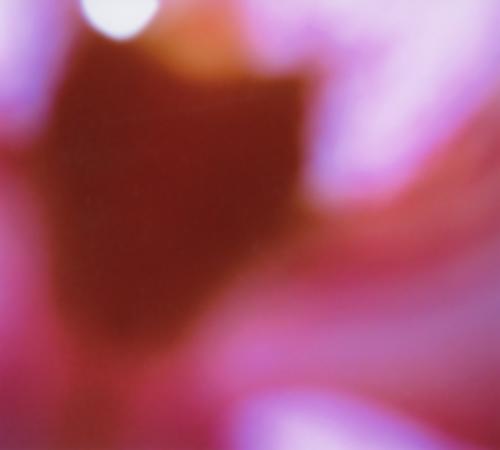 Orchidee001_naturkinder