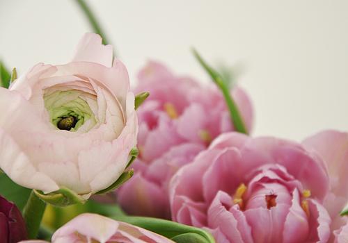 DSC_8706a_naturkinder_tulpen
