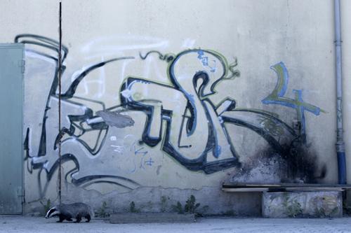K7_01_Klaus_Echle_Graffiti