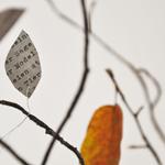 Herbstzweige_tut