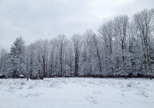 NATURKINDER: Winterspaziergang