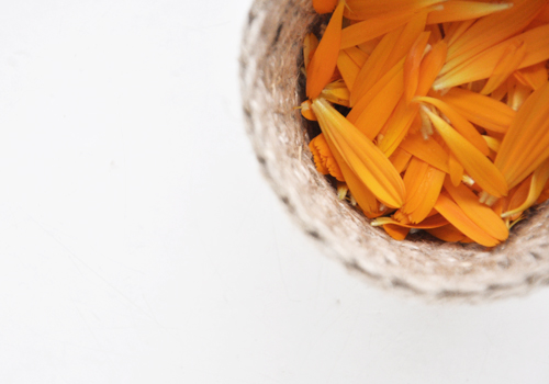 NATURKINDER: Making Calendula Candles 0772