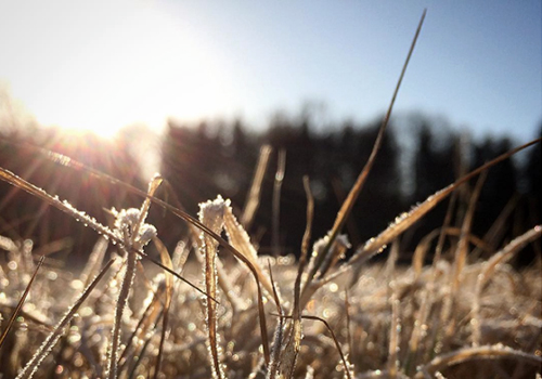NATURKINDER: Frost and Sun