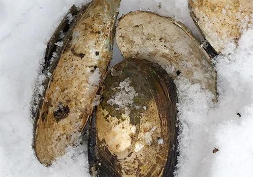 NATURKINDER: Magic Finds| River Mussels ... Bachmuscheln