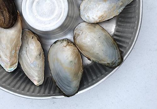 NATURKINDER: Magic Finds| River Mussels ... Bachmuscheln 2579
