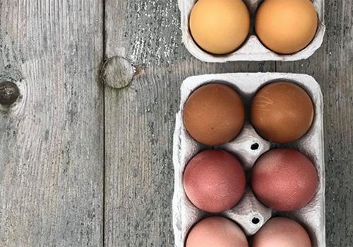 NATURKINDER: Ostereier mit Naturfarben färben | Kurkuma, Zwiebel, Avocado