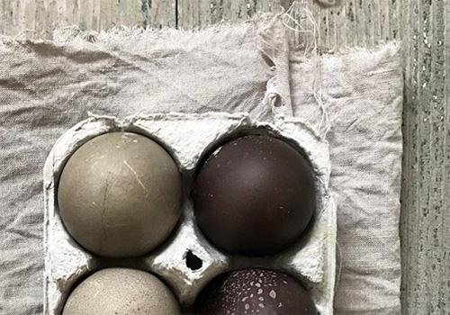 NATURKINDER: Oster Eier mit Naturfarben färben (Schwarze Bohnen und heisse Holunderbeeren) | Dyeing Easter Eggs with Natural Colors (Black Beans and hot Elder Berries)