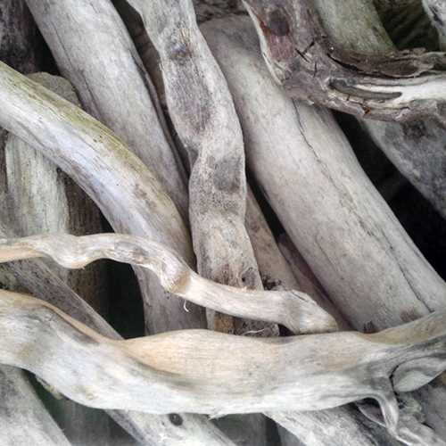 NATURKINDER: Drift Wood