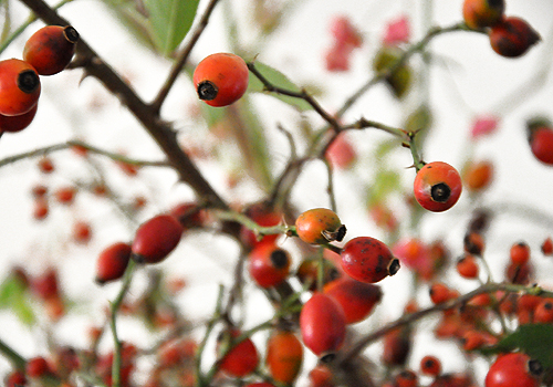 NATURKINDER: Rosehips 3871