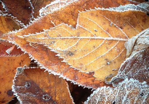 NATURKINDER_frost_01