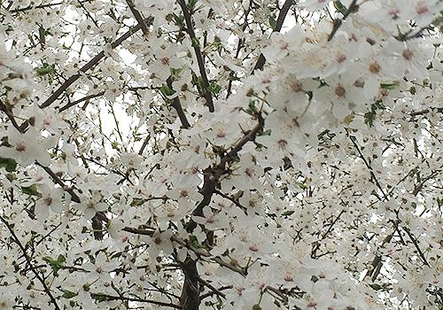 NATURKINDER: Spring 2788