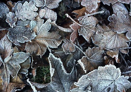 Naturkinder_frost