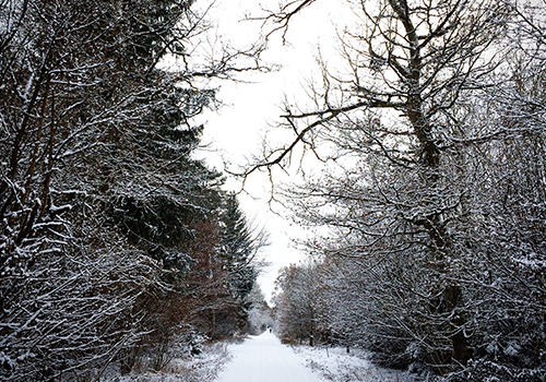 NATURKINDER: First Snow 0884