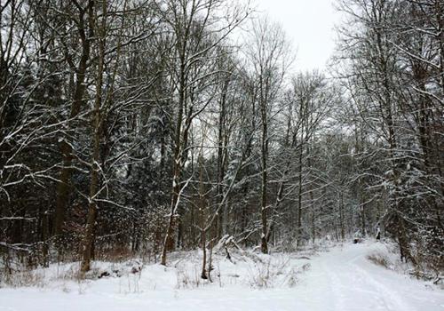 NATURKINDER: Winter
