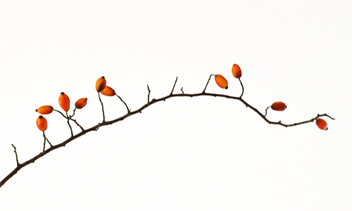 NATURKINDER: Rosehips 3846