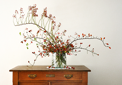NATURKINDER: Rosehips 3879
