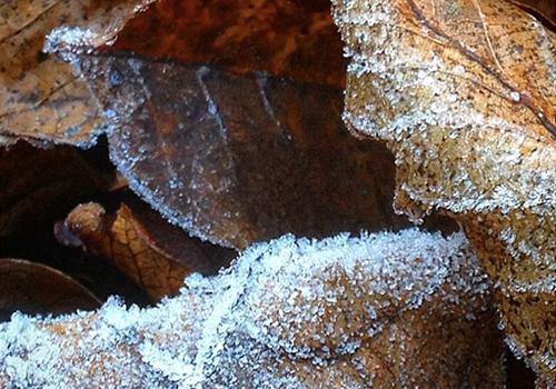 NATURKINDER_frost_02