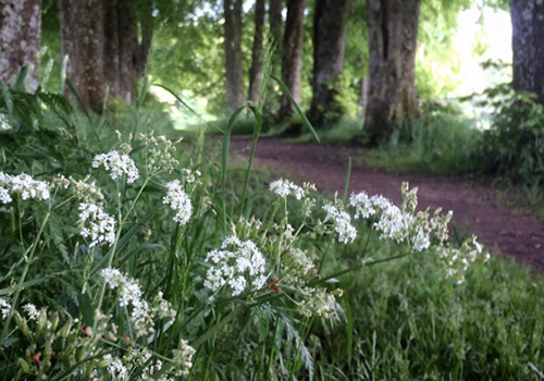 NATURKINDER: Flowers and Trees