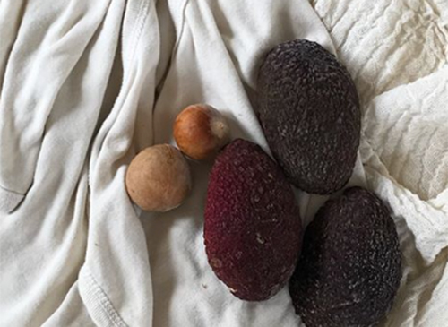 NATURKINDER: Handdyeing (cotton, silk, yarn) with Natural Materials | Avocado