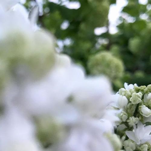 NATURKINDER: In the garden   lilac