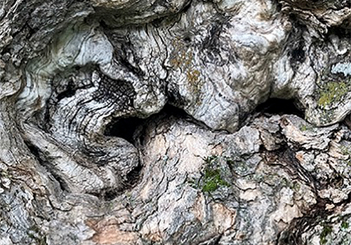 NATURKINDER   pattern and texture   wood