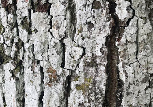 NATURKINDER | pattern and texture | bark
