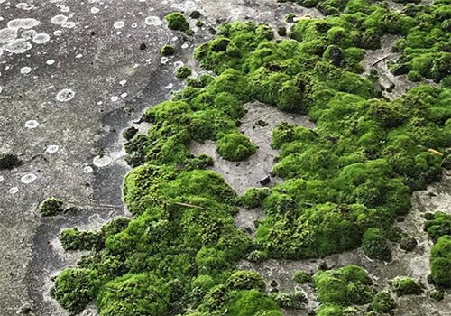 NATURKINDER | pattern and texture | moss